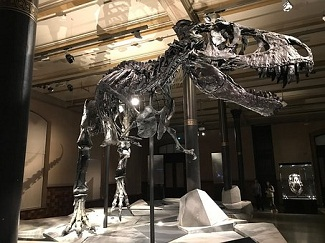 London's Natural History Museum is Thankful to a 10-year-old Boy for Finding Mistake in Dinosaur Labeling