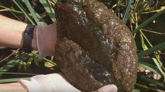 Gelatinous, brain-like blob found in Vancouver's Stanley Park
